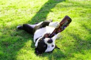 dog-drink-beer-upside-down