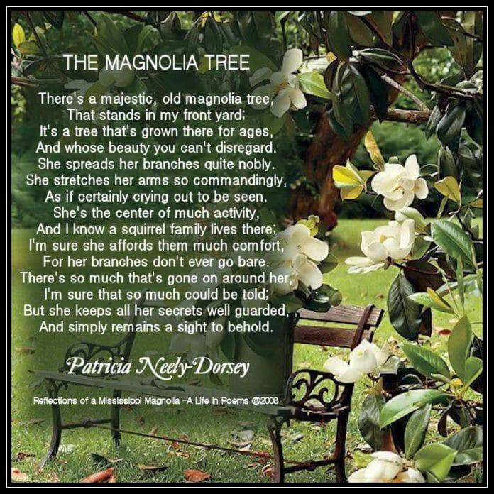a a blog magnolia