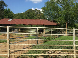 Beef is another option for Home Place Pastures.